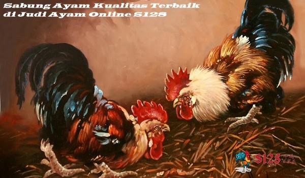 Sabung Ayam Kualitas Terbaik di Judi Ayam Online S128